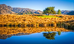 The Reflection Tree (Gage Salyards) Tags: morning newzealand reflection tree nature water grass sunrise landscape photography golden aperture hills fields queenstown filters hdr waterscape fstop thehills phototour reflectionphotography newzealandadventure micro43 olympusomd gagesalyards treyratcliffnewzealandadventure thehillsgolfcourse