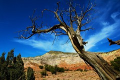 IMG_9405 (heatherbirdtx) Tags: light shadow cliff sunlight newmexico tree rock contrast dead daylight desert painted wideangle saturation homage ghostranch georgiaokeeffe geraldstree