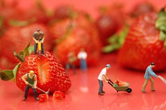 Berry Hard Work (JD Hancock) Tags: red favorite scale fruit work fun toy miniature strawberry berry little small working perspective cc tiny figure ho shovel btp hoscale littledudes inkitchen cmwd cmwdred jdhancock berryhardworksetup