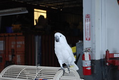 "This parrot is part of the charm at Euro Auto Performance • <a style=""font-size:0.8em;"" href=""http://www.flickr.com/photos/95256275@N08/8675506721/"" target=""_blank"">View on Flickr</a>"