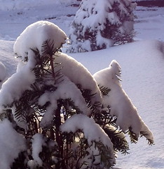 Covered (Jeanne W Pics) Tags: winter snow tree minnesota phonecam midwest snowfall wonderland iphone winterbeauty