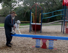the see-saw (Ben Brown (dog about town)) Tags: dog playground vermont swings seesaw slide benbrown dogabouttown stevensreserve maltesexshihtzu