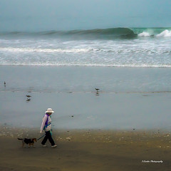 Avila Beach Woman and Dog (stephencurtin) Tags: ocean california woman usa dog color beach birds walking sand pacific wave photograph avila shimmer thechallengefactory thepinnaclehof stephencurtin tphofweek217