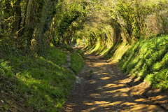 THE TUNNEL....TO HALNAKER (mark_rutley) Tags: trees westsussex path walk hike footpath halnaker