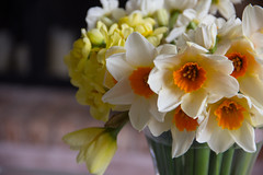 Daffodils (Annette - A Simple Breath) Tags: flowers homeandgarden