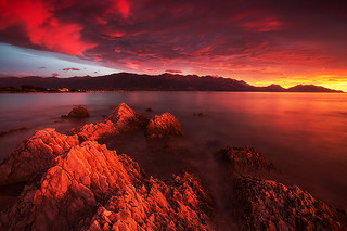 Blood of Kaikoura