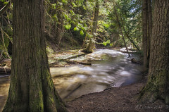 Sunshine on Thompson Creek (SimplyAmy74) Tags: longexposure trees sunshine creek landscape washington spring spokane driving exploring roadtrip pacificnorthwest washingtonstate smoothwater newmanlake