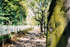(lemonhats) Tags: green iso400 uv foliage vintagecamera f56 1500 analogphotography nerimaku canonetql17giii hikarigaokapark tokyoto filmisnotdead colornegativefilm 40mm17 agfavistaplus400