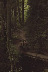 On and up. (joshsdickson) Tags: life old bridge trees summer mountain nature oregon forest vintage outdoors photography woods hiking wildlife hike trail faded indie firs photooftheday rickety