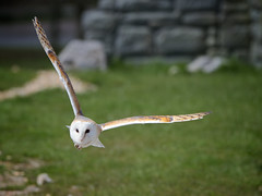 Is that a mouse? (Jchales.co.uk) Tags: park sun jason cute window nature glass car animals barn canon that lens mouse photography drive living is colours awesome safari 7d owl around wiltshire captive longleat catchy hales swooping warminster 2013 wwwjchalescouk jchales