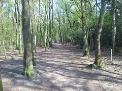 20130505_165522 (MelisaTG) Tags: cameraphone trees woods urbanwoods greenleafs