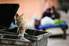 Cat Walk. (Crusade.) Tags: street travel animal cat canon turkey bokeh kitty 70200 izmir 70200f4l 5d2