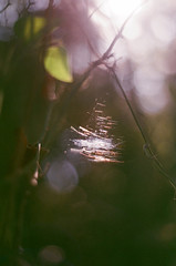 (inmost_light) Tags: trees sunlight film nature yellow analog forest woodland triangle bokeh sunny cobweb dreamy analogue magical