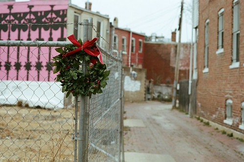 Festive, with barbed wire