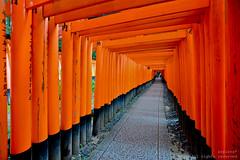 The Walk of the Thousand Red Pillars (asplera*) Tags: trip travel red japan kyoto shrine inari path walk pillar culture shinto kansai fushimi