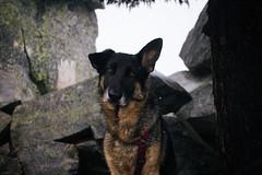 IMG_4080.jpg (Backpacking With Bacon) Tags: washington northerncascades hiking mtpilchuck granitefalls unitedstates us