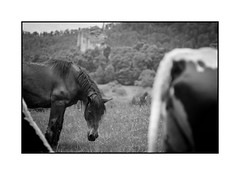 Balade au Fleckenstein (Pierre_Bn) Tags: fuji fujifilm alsace fleckenstein lembach vosges vosgesdunord minolta mc 135mm xpro1