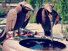In the garden <> Dans le jardin... (France-) Tags: 56 oiseau bird garden jardin t summer bc fountain water eau