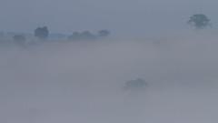 Misty Morning (fstop186) Tags: misty morning fog clouds valley trees mist hills valleys