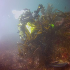 19 July 2016 - Scillies Trip PICT0224 (severnsidesubaqua) Tags: scillies scilly scuba diving