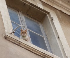Chat  la fentre (thiery49) Tags: lubron chat cat