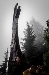 Pilchuk 0858 160904 (jetcitygrom) Tags: tree wood mist fog cascades mount pilchuk ricoh gr 28mm wide angle