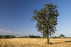 Seul **--- ° (Titole) Tags: tree harvest field nicolefaton titole bluesky essonne france friendlychallenges
