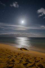Turtle by Moonlight (mom's favorite photographer) Tags: turtle hawaii maui lahaina night