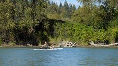 DSCF4394 (pektusin) Tags: mission mapleridge kayaking