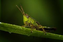 grasshopper (Aleoko) Tags: fotocompetitionbronze