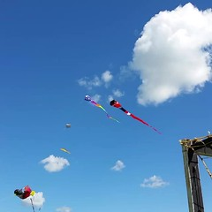 Video of Kite Fest 2015