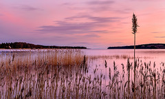 Tallest (Peter Vestin) Tags: nikond7000 nikonafsdxnikkor35mmf18g siruin3204x siruik30x adobecreativecloudphotography fiskartorpet skattkrr karlstad vrmland sweden vnern nature landscape seascape sunset