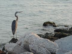 DSCN0158 (Dale_Wiley) Tags: water bluebird rocks