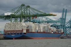 Maersk Sarat DST_7935 (larry_antwerp) Tags: port        belgium belgi          schip ship vessel        schelde        psa maersk noordzeeterminal maersksarat 9732591