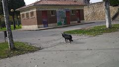 OPC 091115 068 (Jusotil_1943) Tags: opc091115 tejado perro arboles entrearboles troncos caseta