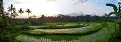 Menjelang Malam di Pematang Sawah (Everyone Sinks Starco (using album)) Tags: bali ricefields sawah