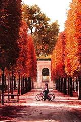 Automne  Paris  (FlaviaDan) Tags: autumn foliage colors red orange cool love nature paris city street photo photography picture culture fashion bike threes europe