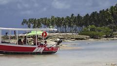 Vida boa - what a good life! A life of the gods ! (Lucia Cysneiros) Tags: brasil pernambuco praia praiadoscarneiros