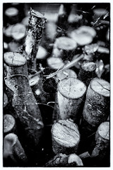 Dry (Matt GNH) Tags: bw abstract dry kindling log logs order spider spiderweb split wood