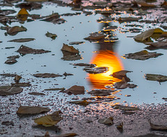 Park Light Reflections. (Omygodtom) Tags: abstract art park puddle light outdoors leaves reflection reflections nature nikon d7100 dof tamron90mm bokeh