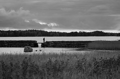 Shoreline (Antti Tassberg) Tags: 135mm autumn bw beach blackandwhite fall landscape lens monochrome prime ranta shore syksy espoo uusimaa finland