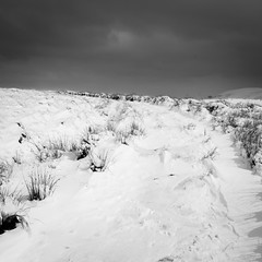 (Jo Duggan) Tags: uk bw white snow black monochrome weather wales square nikon rhayader elanvalley bsquare bloodycold d300s