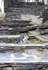 little cat (Oscar.vng) Tags: street stone stairs cat canon calle gato catalunya escaleras gatito cadaques piedra littlecat capdecreus 60d oscarvng osanchezphoto