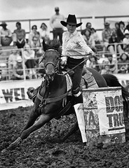 1983 CVD Rodeo (ConejoThruTheLens) Tags: horses rodeos conejovalleydays conejothroughthelens