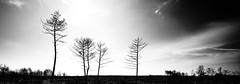 Riarsa Eleganza (bebo82) Tags: trees blackandwhite bw sun alberi clouds fire nuvole pentax sole incendio biancoenero pentaxk20d pentaxk20