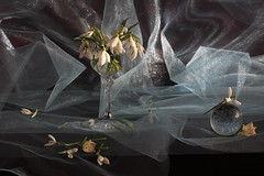 Icy Night Of My Spirit (panga_ua) Tags: light stilllife art nature beautiful beauty mystery composition canon spectacular lights fantastic artwork shadows darkness artistic bokeh availablelight shapes ukraine poetic explore creation mysterious snowdrops imagination natalie icy floralarrangement netting arrangement springflowers evanescence tabletop gauze bodegon naturemorte crystalball panga artisticphotography sweetdreams rivne naturamorta bluish artphotography sharpfocus explored earlybloomers  nataliepanga whyisthebeautysomuchmorethanvisual icynightofmyspirit