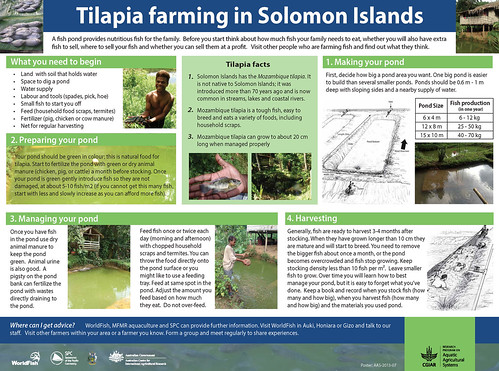 Tilapia farming in Solomon Islands
