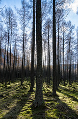 """Trees at Buttermere • <a style=""""font-size:0.8em;"""" href=""""https://www.flickr.com/photos/21540187@N07/8638754984/"""" target=""""_blank"""">View on Flickr</a>"""