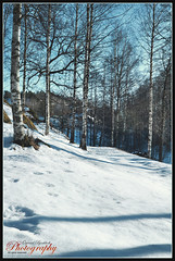 The last snow (yvind Bjerkholt (Thanks for 8,8 million+ views)) Tags: winter snow nature beautiful norway forest canon landscape eos norge dream april soe hdr srlandet