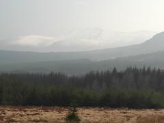 Hazy snowy Wicklow Mountains (lurcherlad) Tags: ireland mountain snow tree pine forest haze heather vista wicklow upland sallygap